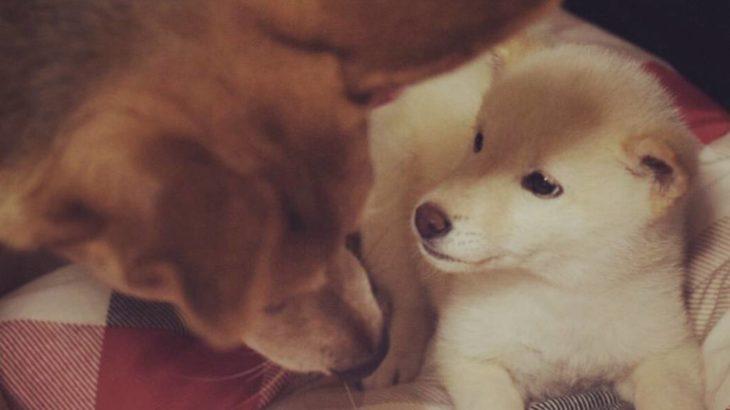 我が愛犬(むぎちゃん♀)のかわいさを知ってほしい #1
