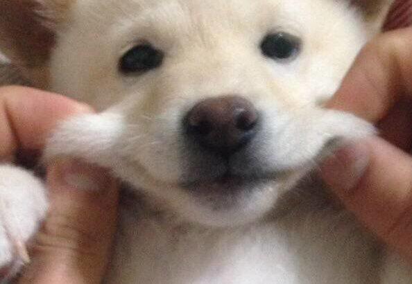 我が愛犬(むぎちゃん♀)のかわいさを知ってほしい #2